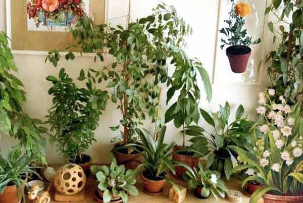Зимние вредители комнатных и кадочных растений