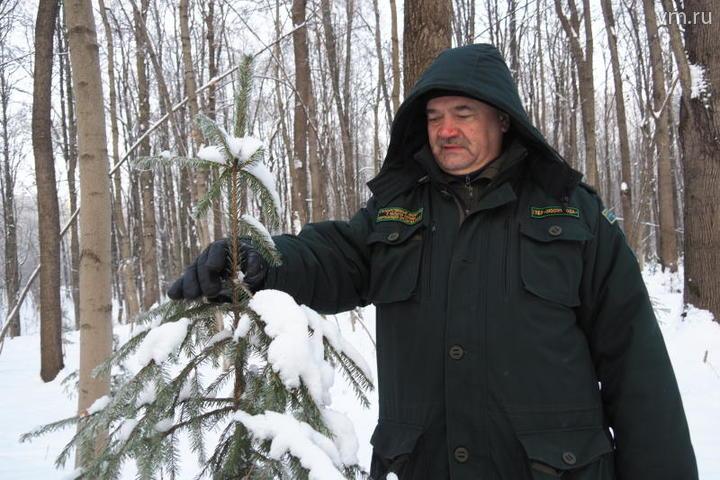 Не рубите, мужики: инспекторы ежедневно патрулируют леса и парки