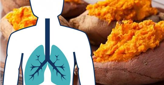 Сладкий картофель для бывших курильщиков: доказано, что он борется с эмфиземой и ростом рака легких