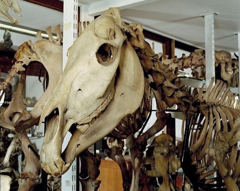 gmoz33 Лондонский музей зоологии и сравнительной анатомии Гранта