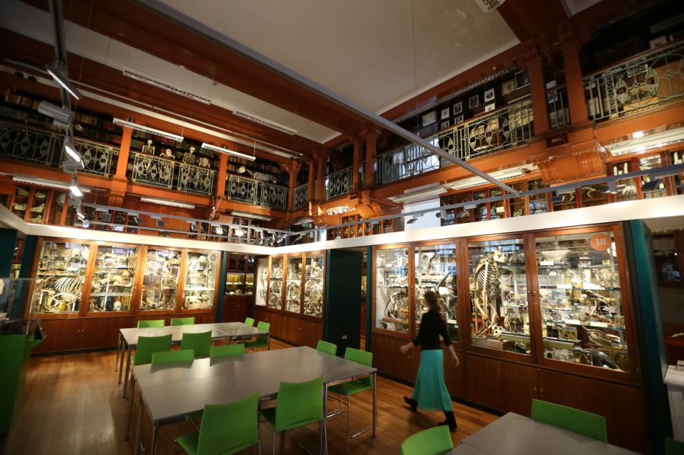 gmoz38 Лондонский музей зоологии и сравнительной анатомии Гранта