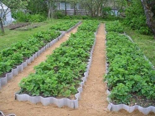 Традиционный огород: копаем один раз