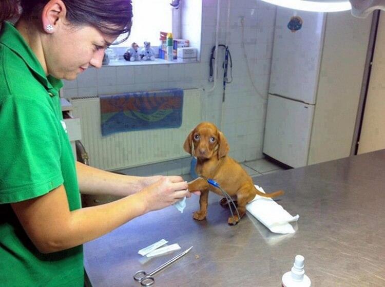 20 причин работать ветеринаром – подборка прекрасных фото