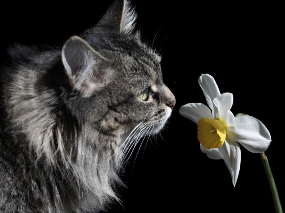 Кот и нарцисс (история о любви)