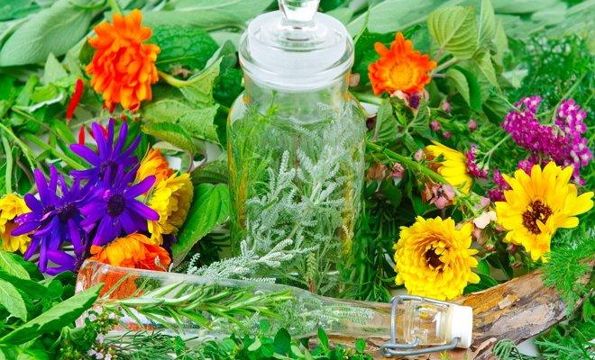 Делаем домашнюю аптечку из растений с участка