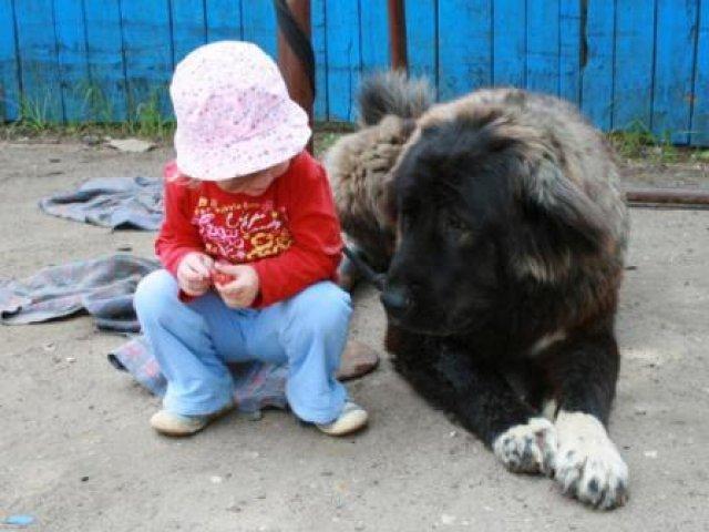 Собака Маша