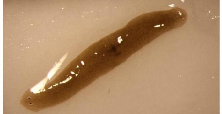 Из космоса на Землю привезли уникального двухголового червя