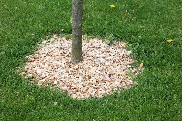 Мульча из древесной щепы обладает массой достоинств