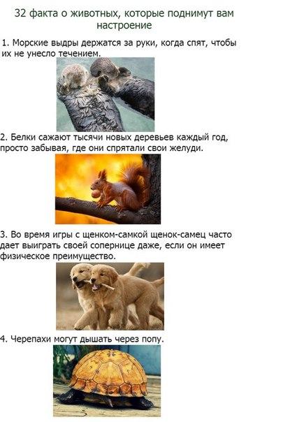 32 факта о животных, которые поднимут вам настроение