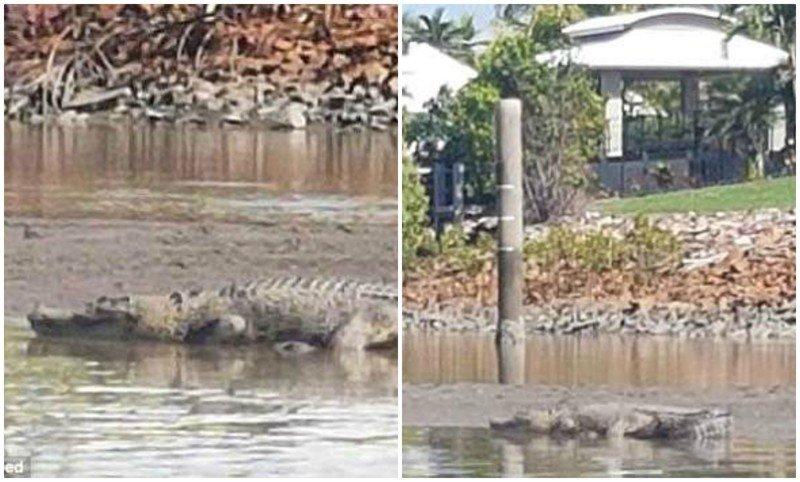 Вторжение монстров: в жилом квартале Австралии заметили трехметрового крокодила