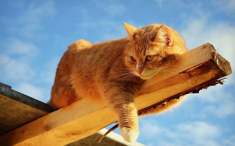 Улётная стратегия кота Василия