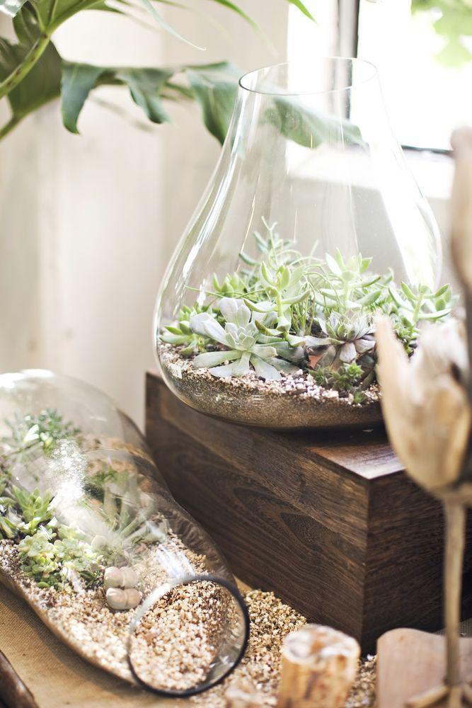 Красота и простота: 36 идей суккулентов в интерьере, фото № 7