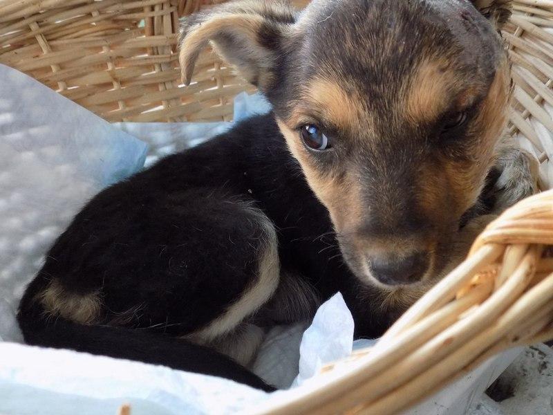 Как в Пинске щенка спасали