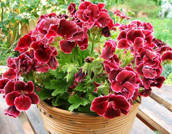 Топ 10 эффективных средств для защиты растений