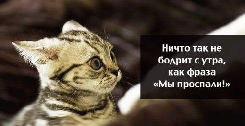 Фото, которые поднимут настроение)