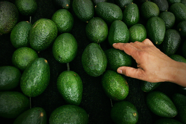 Прибыльнее марихуаны: Как мир подсел на авокадо
