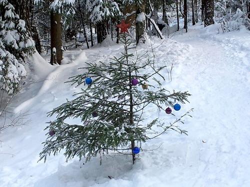 Чудеса Подушкинского леса: справляем Новый Год
