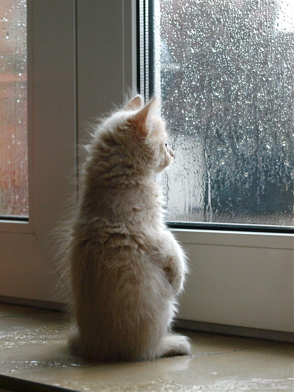Что делают кошки, когда вас нет дома? Занимательно, кошки