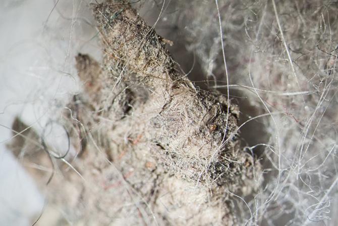 Как выглядит ваша домашняя пыль под микроскопом