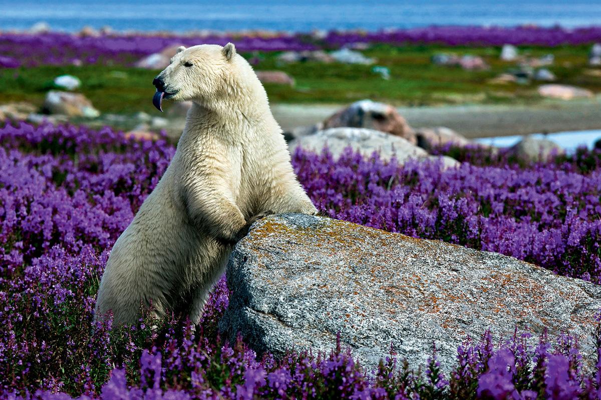 Россия сегодня ждет туров в Арктику