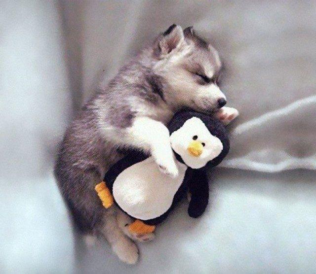 Картинки по запросу спящие животные