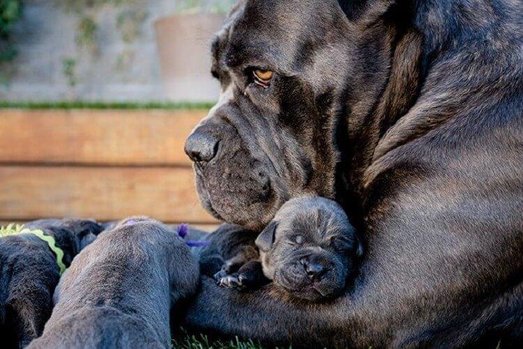 20 взрослых собак и их милые…