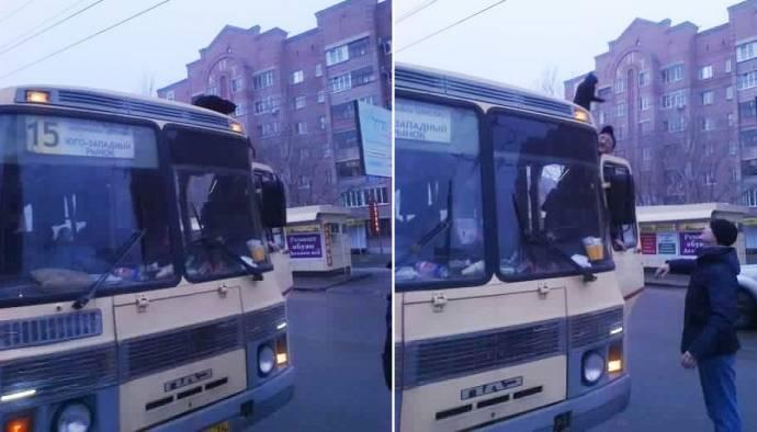 В Воронеже спасли кошку, которая ездила по городу на крыше маршрутки