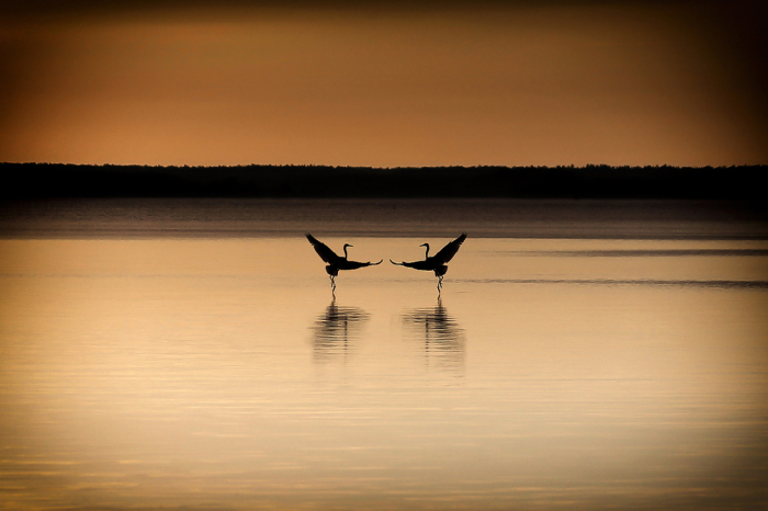 Танец любви. / Фото: Юлия Войнич.