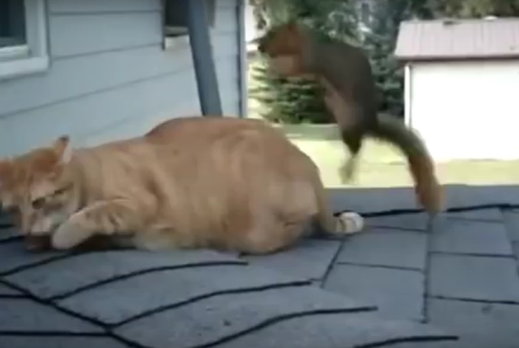 Кот и белка нашли друг друга…