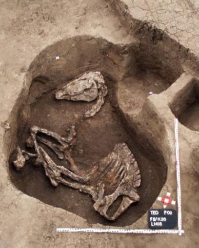 Индоевропейское происхождение названия коня в языках древнего Ближнего Востока