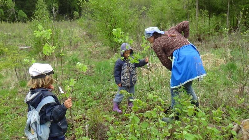 17/05/2014 - Всероссийский день посадки леса.