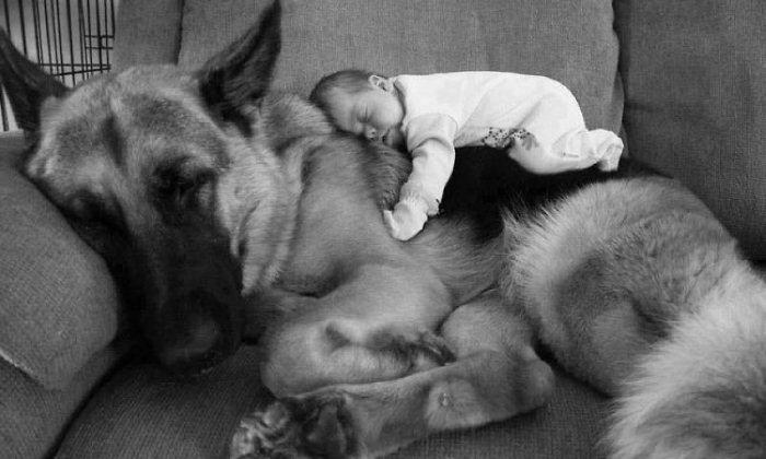 История пса, который согрел ребенка своим теплом.