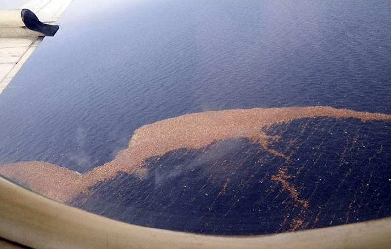 Львов? В Тихом океане обнаружили скопление мусора размером больше Франции
