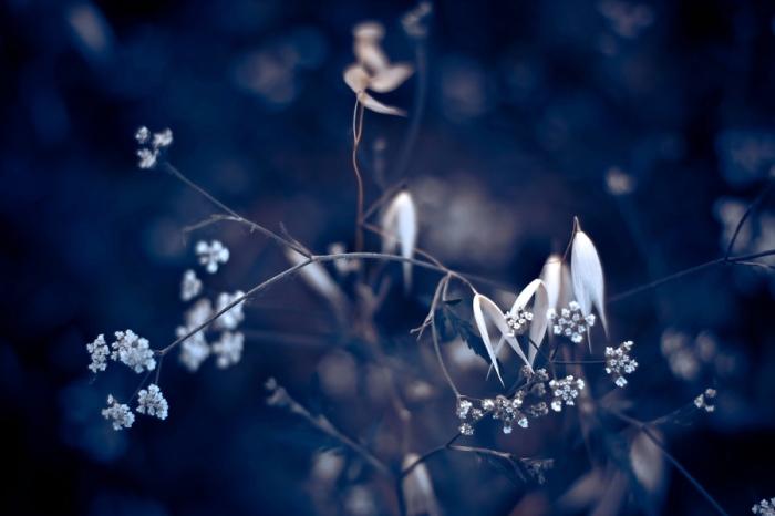 Сухоцветы. Автор: Luis Mariano Gonzalez.
