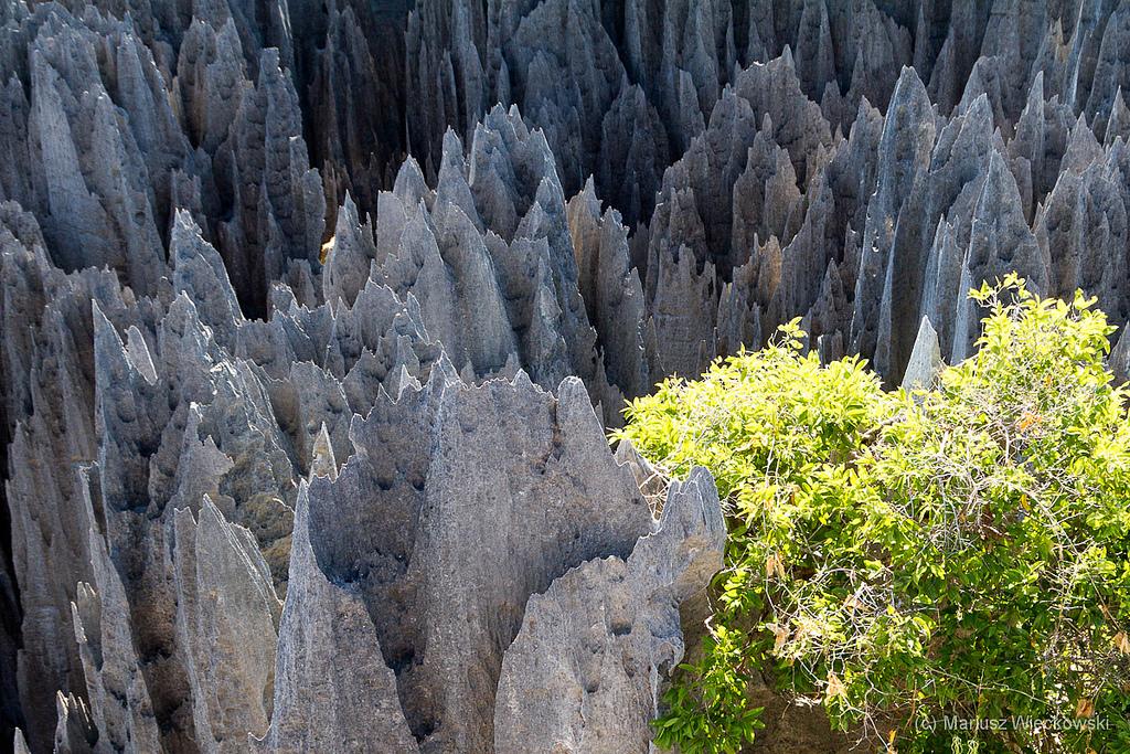 5924046728 af40a35a11 b Каменный лес на Мадагаскаре