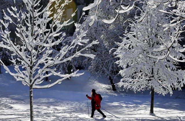 Красоты зимы   зима, фото