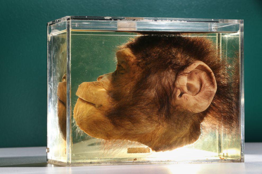 gmoz05 Лондонский музей зоологии и сравнительной анатомии Гранта