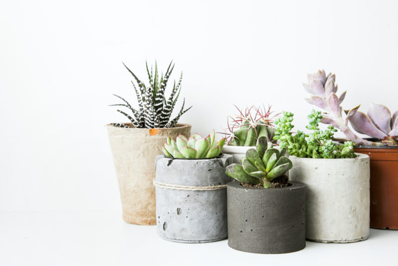 Как начать озеленять квартиру (и не погубить в процессе ни одного цветка)