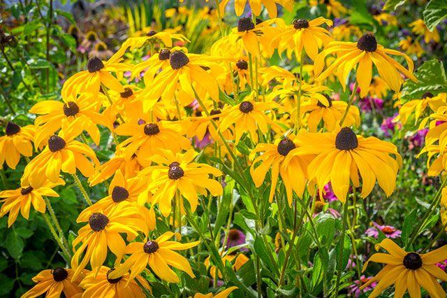 Как создать осенний цветник на участке? Советы специалистов