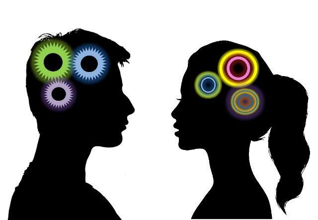 Мужской мозг имеет больше сходства с мозгом самца обезьяны, чем с женским мозгом