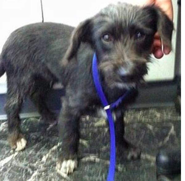 Испуганный щенок многое пережил, живя на улице. Но теперь у него есть любящая семья