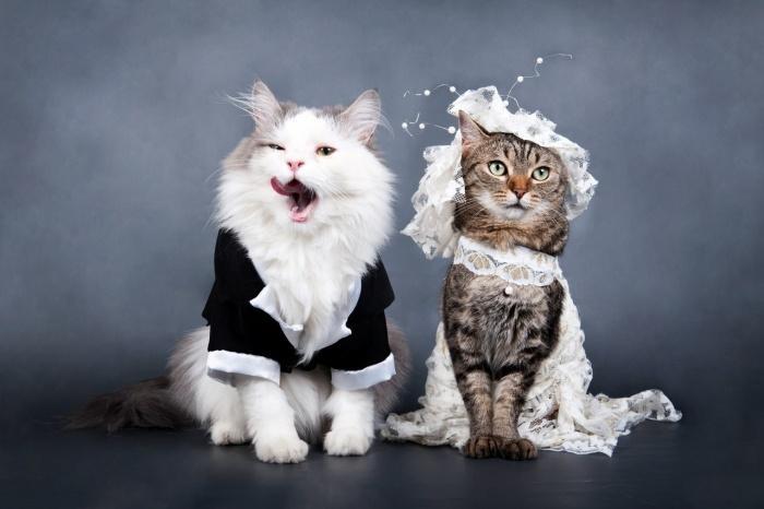 КОШКИН ДОМ. Вязка котов и кошек