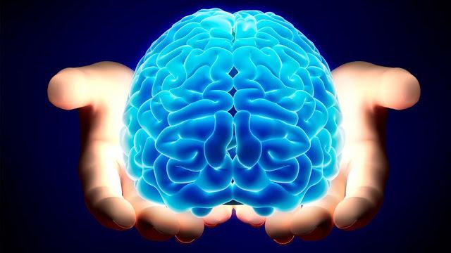 Продукты для правильной работы мозга