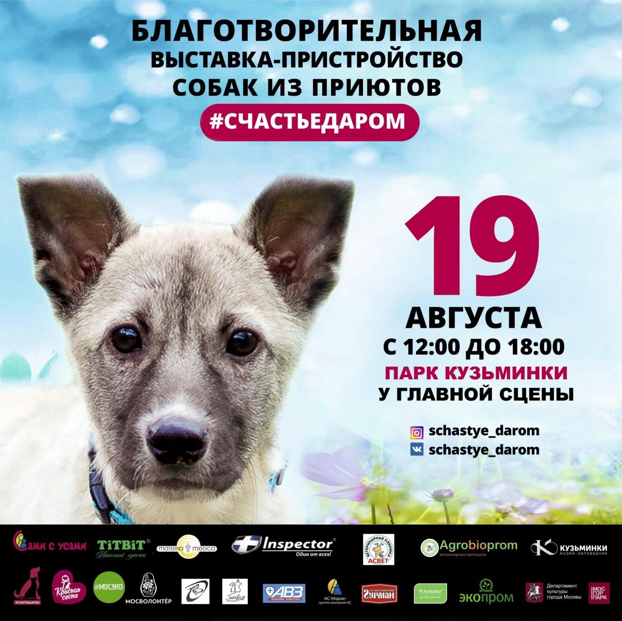 Счастье даром! Выставка-пристрой собак в парке Кузьминки (г. Москва)