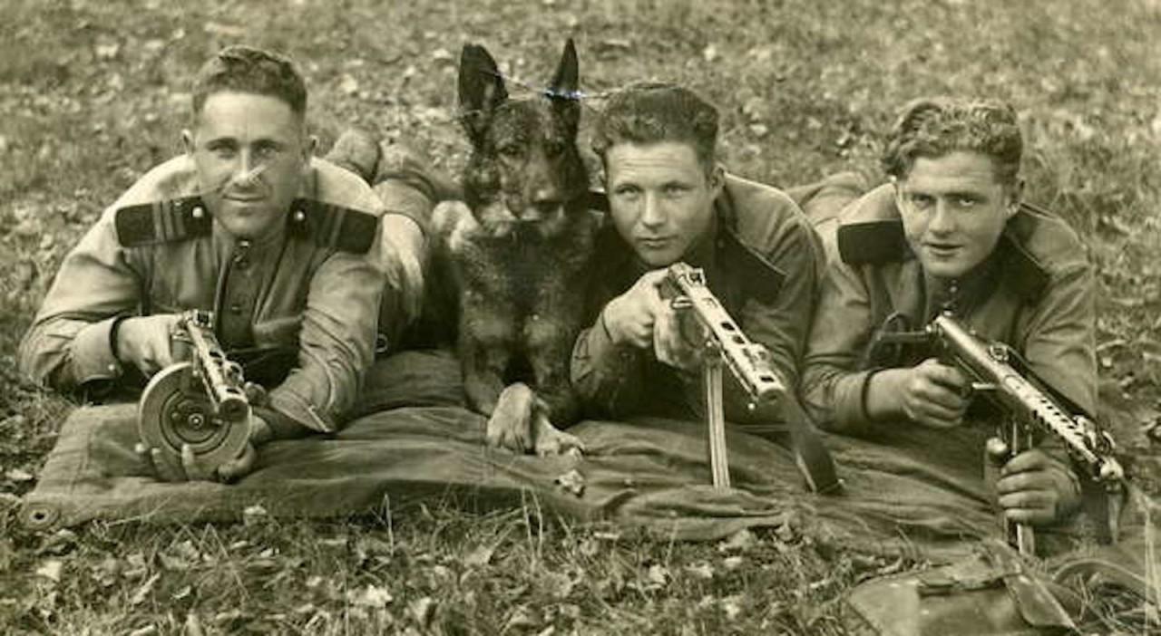 Интересные факты о Великой Отечественной войне. Животные на войне.