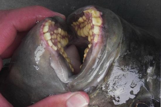 7 самых странных и страшных ртов в животном мире
