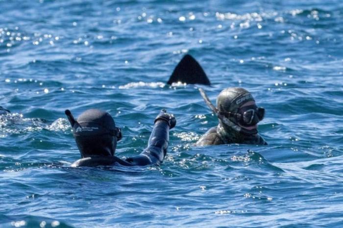 Дайверы спустились под воду …