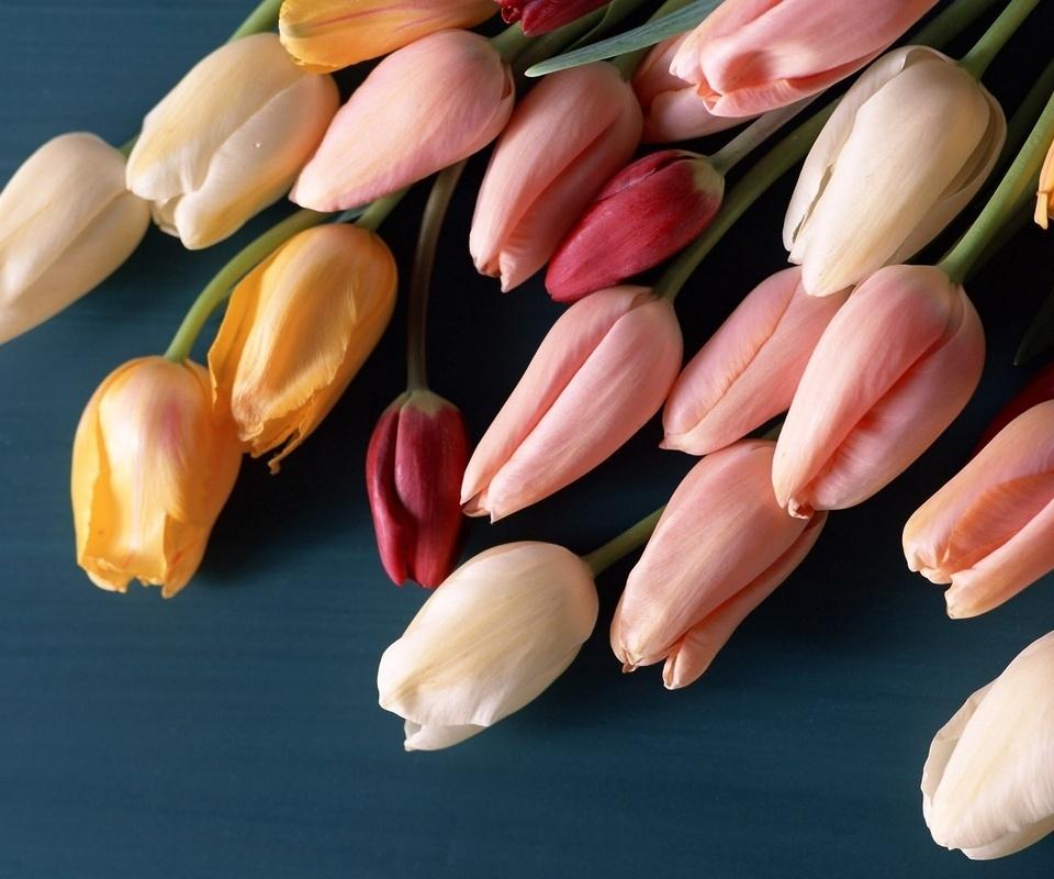 Цветы, букет, бутоны, разноцветные, тюльпаны