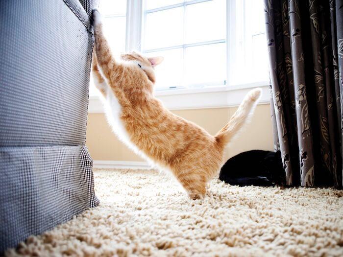 Верный способ раз и навсегда отучить кота портить мебель...