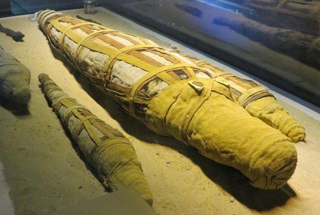 В Египте археологи обнаружили мумию огромнейшего крокодила